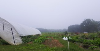 A foggy morning at the Fat Radish.