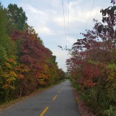 The beautiful fall trail near my housesit.